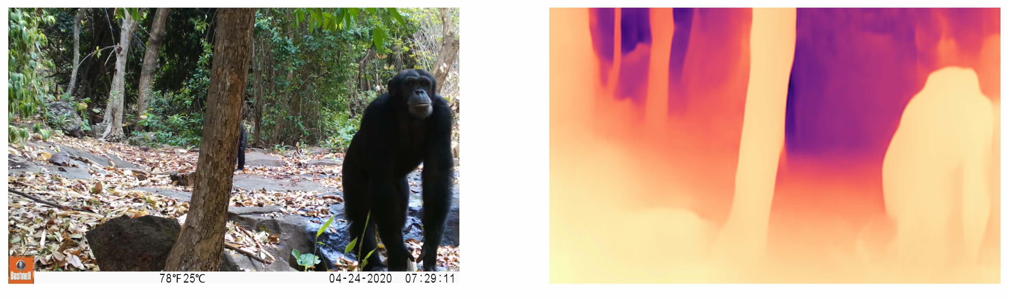 An image of a chimpanzee, and a model-generated depth mask for the image